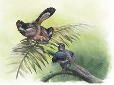 Emily Willoughby 'Archaeopteryx and Aurornis' The Earliest Birds