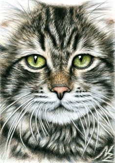 Cats Face by nicole zeug on ARTwanted