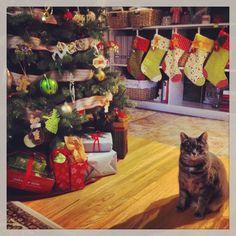 Kitty loves Christmas