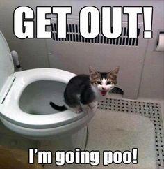 kitty going toilet