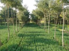 Image result for agroforestry