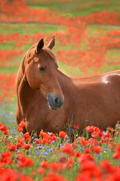 Horse among the field. #horse #field #Red #flowers