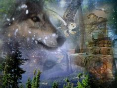 ♥ Wolves & Owls