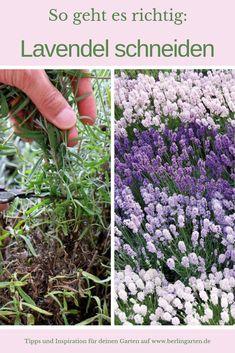 Garden Types, Herb Garden, Vegetable Garden, Clean Out, Tree Pruning, Bountiful Harvest, Organic Gardening Tips, Pallets Garden, Garden Care