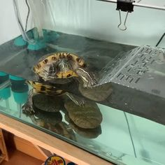 Red Eared Slider Tank, Red Eared Slider Turtle, Turtle Care, Pet Turtle, Red Ear Turtle, Turtle Terrarium, Cute Baby Turtles, Turtle Aquarium, Pet Care
