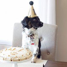 ¿Celebrar una fiesta de cumpleaños para tu perro? ¿Por qué no?