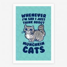 #cats #kitty #munchkincats #cute #love