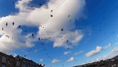 WATCH:Seagull Skytrails: An Echo Time-Lapse... | Colossal