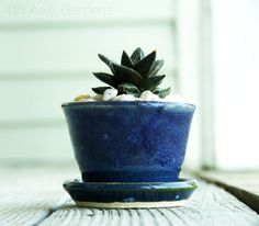 aloe plant + pebbles + hand-thrown planter with built-in saucer = let's do this.