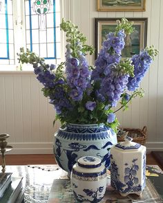 A good day for Delphiniums.....