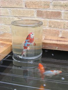 My DIY fish observation tower / observatory made from a massive vase and jubilee clip. Love it
