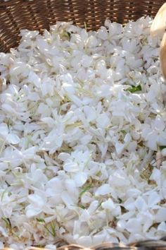 Jasmine flowers. The Jasmine flower forms a vital ingredient of almost all ayurvedic medicines