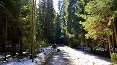 snowy forest road x Snowy Forest, Forest Road, Tree Forest, Forest Wallpaper, Nature Wallpaper, Cool Wallpaper, Spring Snow, Spring Forest, Natural Beauty