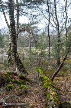 In the south of National Park Sallandse Heuvelrug one can find the Holterberg. This is a nice place to go for a hike in the forrest and moorland. Hiking With Kids, Nice Place, Netherlands, Dutch, Places To Go, National Parks, Nature, Plants, The Nederlands