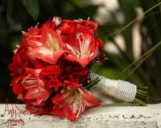 This bride loved variegated flowers and especially these gorgeous striped amaryllis. And for an extra special touch, we added some bling to her wrap. Her bridesmaids wore red and carried all white bouquets with pops of red.