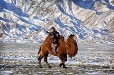 Mongolian man riding on camel, Gobi desert http://reversehomesickness.com/