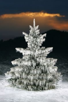 Tree dripping with icicles.