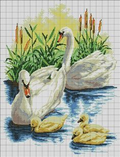 Swans Water Scene Color Image - Could use to draw/paint (grids)