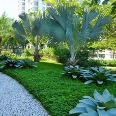 If you live in a dry and arid climate then your desert landscaping is going to take a little more planning than some other parts of the country. desert landscaping will have to work with a plan that includes only plants and trees that Palm Trees Landscaping, Florida Landscaping, Tropical Landscaping, Outdoor Landscaping, Landscaping Design, Front Garden Landscape, Garden Shrubs, Garden Trees, Tropical Garden Design