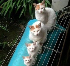 They look like those nesting dolls!  Lol.  =(^.^)=  God Bless them!  (: