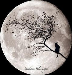 Black cat in a tree looking at the Full Moon. Very appropriate for Halloween or Samhain. Moon Moon, Moon Art, Big Moon, Shoot The Moon, Moon Magic, Lunar Magic, Magic Cat, Beautiful Moon, Jolie Photo