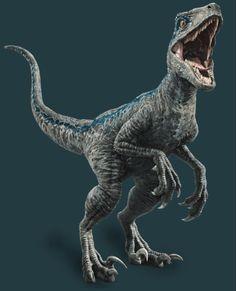 Jurassic World Fallen Kingdom volles Foto des Velociraptors - Beliebt Bilder Dinosaur Photo, Dinosaur Images, Dinosaur Pictures, Dinosaur Art, Dinosaur Tracks, Dinosaur Activities, Jurassic World Raptors, Blue Jurassic World, Jurassic World Fallen Kingdom