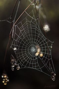 Spider webs in the flower garden Spider Art, Spider Webs, Foto Macro, Raindrops And Roses, Itsy Bitsy Spider, Beltane, Pics Art, Macro Photography, Levitation Photography