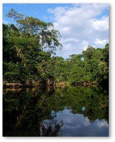 Ecuador rainforest   Your Guide To Rainforest Animals, Tropical Rainforests