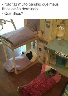 BEM ASSIM! ❤️❤️❤️ #filhode4patas #gato #cachorro #amoanimais #petshop #petmeupet