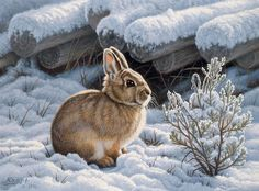 Image result for rabbit art