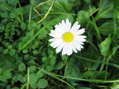 Horticulture www craigslist com usa