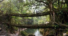 De levende bruggen van Meghalya, India. Ze bestaan uit boomwortels.