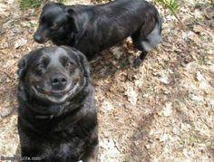 Funny animal - impressive image