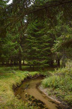 Δάσος Ελατιά (Καρά Ντερέ) | Δάση | Φύση | Ν. Δράμας | Περιοχές | WonderGreece.gr