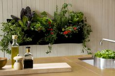 Woolly Pocket Wally Three Hanging Wall Planters @ Pigment