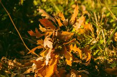 Colors of #autumn #photography #Canon #Salerno #nature