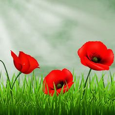 Free Image on Pixabay - Lawn, Nature, Field, Henar, Garden Free Pictures, Free Images, Garden Equipment, Canada, Lawn And Garden, Red Flowers, Good Morning, Poppies, Nighty Night