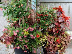 12-August 2011-Paul Zammit Orange Plant, Public Garden, Tropical Plants, Container Gardening, Floral Wreath, Planters, Gardens, Backyard, Red