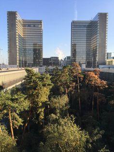 La Bibliothèque nationale de France (BnF) François Mitterrand et son jardin-forêt http://www.pariscotejardin.fr/2015/10/la-bnf-francois-mitterrand-et-son-jardin-foret/
