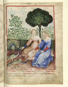 Nouvelle acquisition latine 1673, fol. 71, Femmes nourrissant des paons. Tacuinum sanitatis, Milano or Pavie (Italy), 1390-1400.