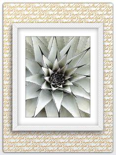 Succulent Print, Cactus Print, Botanical Art, Cactus Art, Cactus Poster, Cactus Photography, Cactus Printable, Botanical Photography, Nature