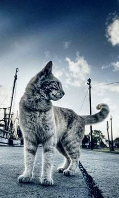 Hd harbour cat mobile phone wallpapers