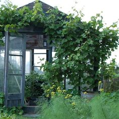 I'd never come inside if this was mine...  #greenhouse #glasshouse #conservatory #gardendesign #vines #verdant #lush #pottingshed #inspiration #imageviapinterest