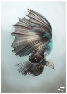 artistic betta fish painting i found more to love