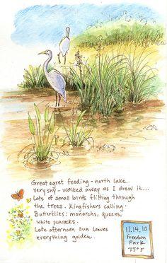 Great egret, via Flickr.