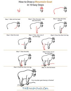 how to draw a mountain goat step by