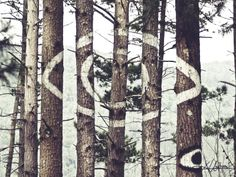 Oma forestis a work of art created byAgustin Ibarrola, a Basque sculptor and painter. The work is located in a forest near Kortezubi (Bizk...
