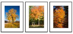 0070, Set of Three(3) Photographs of Colorful Autumn Foliage,Fall Color,Trees,Wall Art,Americana Picture,Wall Art,Art,Fine Art Photography Tree Wall Art, Autumn, Fall, Picture Wall, Fine Art Photography, Art Art, Photographs, Trees, Colorful
