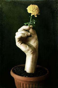 Flowers by Francesco Sambo