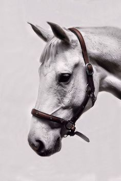 Equine//